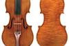 Molitor Stradivarius crop