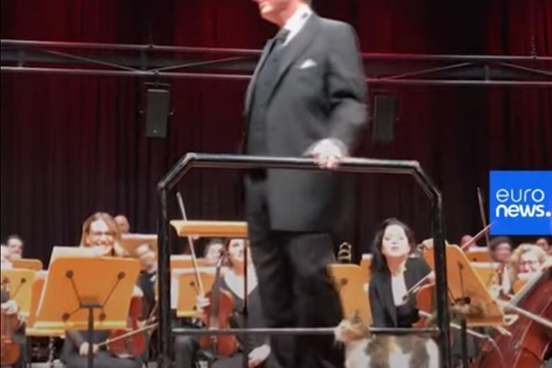 Cat crashes orchestral concert in Istanbul