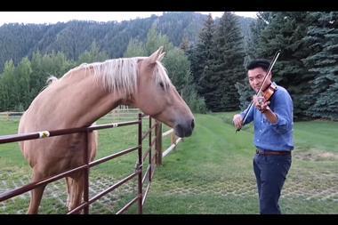 Ray Chen and Horses
