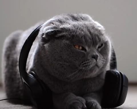 MusicForCats21
